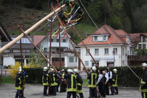 Maibaumstellen in Schapbach